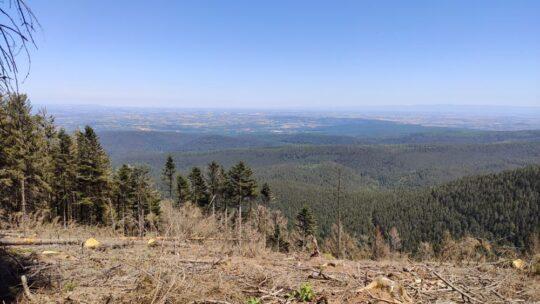 La plaine d'Alsace vue du Schneeberg